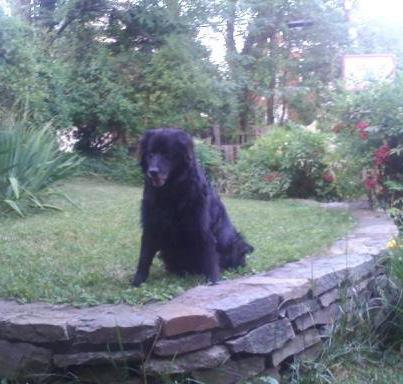 My friend, Buddy, enjoying his sunset years